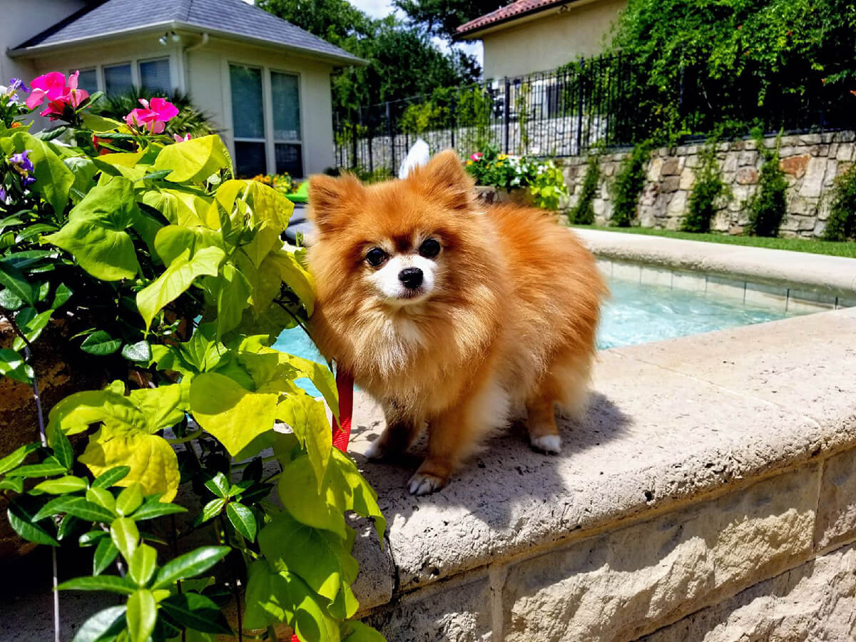 Pet Gallery Grand Paws Pet Sitter North Dallas Pet